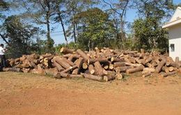 Đắk Lắk: Yêu cầu các chủ rừng rà soát lại toàn bộ diện tích rừng tự nhiên bị phá, bị lấn chiếm trái phép