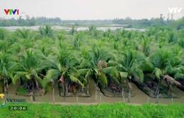 Khám phá cù lao hình hạt gạo ở Cần Thơ