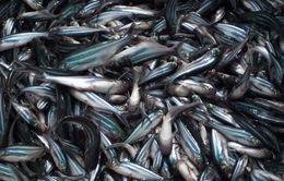 Việt Nam nỗ lực nâng cao chất lượng cá tra giống