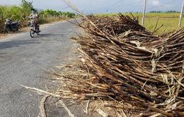 Khánh Hòa: Gần 3ha mía ở xã Cam An Nam bị cháy