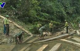Quảng Bình làm rõ trách nhiệm cá nhân, tổ chức liên quan đến vụ phá rừng phòng hộ