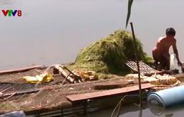 Thừa Thiên Huếa đảm bảm nuôi trồng thuỷ sản vụ mới