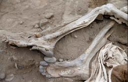Phát hiện xác ướp người nhập cư Trung Quốc ở Peru