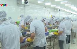 Cá tra Việt Nam bị áp thuế cao kỷ lục tại Mỹ: VASEP khiếu kiện vì sự áp đặt vô lý