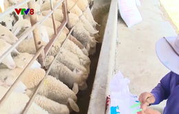 Trang trại chăn nuôi thích ứng thiên tai