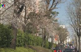 Hàn Quốc nỗ lực thu hút du khách nước ngoài