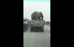"""Hú hồn với xe chở voi """"diễn xiếc"""" chạy băng băng trên Quốc lộ 1A"""