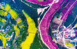 Mùa hoa nở ở Trung Quốc thu hút hàng ngàn khách du lịch