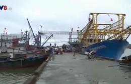 Ngư dân Quảng Trị được mùa đánh bắt cá vụ Bắc