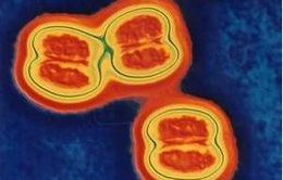 Lạng Sơn: Một trường hợp tử vong do viêm não mô cầu