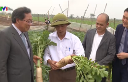 Giải pháp lâu dài cho nông sản Việt