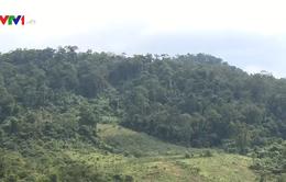 Quảng Nam ứng dụng công nghệ cao bảo vệ rừng