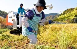 Nhật Bản đề nghị Hong Kong (Trung Quốc) dỡ bỏ lệnh cấm nhập khẩu nông phẩm từ khu vực Fukushima