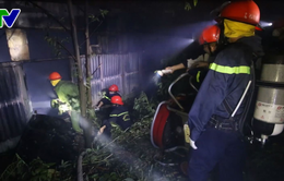 Đà Nẵng: 2 năm, trại dế cháy 2 lần khiến chủ trại suy sụp
