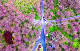 Trung Quốc: Những vườn hoa đẹp như tranh níu chân du khách