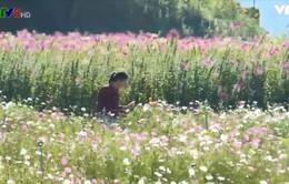 """Sắc hoa Đà Lạt xưa trên cánh đồng hoa """"bước ra từ truyện cổ tích"""""""