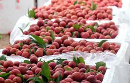 Từ ngày 1/4 hoa quả Việt Nam xuất khẩu sang Quảng Tây, Trung Quốc sẽ bị truy xuất nguồn gốc
