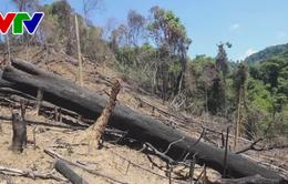 Quảng Nam: Xác định 5 đối tượng trong vụ phá rừng ở huyện Đông Giang và khởi tố một vụ phá rừng ở huyện Nam Giang