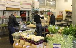 """Thăm """"nhà máy"""" cung cấp hoa cho Hoàng gia Anh"""