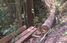 Quảng Nam: Xử lý nghiêm hai vụ phá rừng tại huyện Đông Giang và Nam Giang
