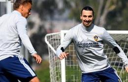 Ibrahimovic tươi như hoa ở buổi tập đầu tiên tại LA Galaxy