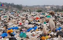 Nhiều quốc gia có xu hướng từ bỏ túi nilon