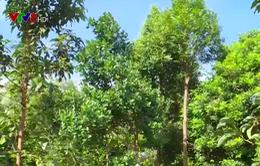 Ninh Thuận phát triển cây ăn quả chịu hạn