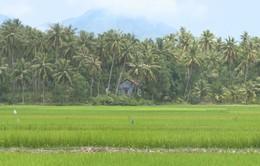 """Thú vị cuộc sống giữa """"vùng dừa Bến Tre"""" ở miền Trung"""