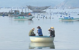 Phú Yên khó xử lý tình trạng phá vỡ quy hoạch vùng nuôi tôm hùm