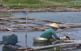 Hơn 300ha mặt nước đầm Ô Loan bị lấn chiếm