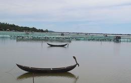 Phú Yên: Hơn 300ha mặt nước đầm Ô Loan bị lấn chiếm