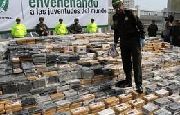 Colombia bắt giữ hơn 5 tấn cocaine giấu trong lô chuối