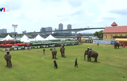 Độc đáo môn cưỡi voi đánh bóng polo