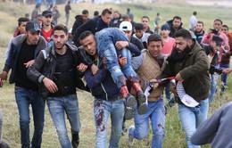 EU yêu cầu điều tra độc lập về tình hình thương vong tại Gaza