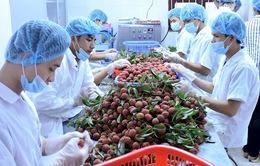 Doanh nghiệp phải thích ứng với việc quy định trong xuất khẩu hoa quả