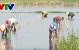 Thừa Thiên Huế triển khai trồng rừng ven biển và đầm phá năm 2018