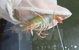 Giám sát dịch bệnh trên tôm và cá tra xuất khẩu