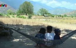 Ninh Thuận: Mất sinh kế trong mùa khô hạn, cuộc sống người dân gặp nhiều khó khăn