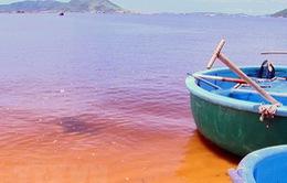 Tảo tạo ra vệt nước màu vàng hồng trên biển Quảng Bình
