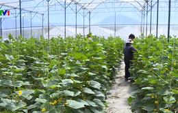 Mục tiêu 15.000 HTX nông nghiệp hoạt động hiệu quả