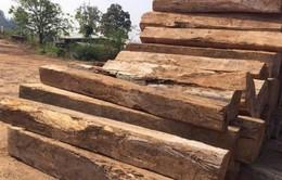 Kon Tum điều tra, xác minh vụ vận chuyển gỗ không rõ nguồn gốc
