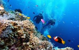 Vẻ đẹp san hô Phú Quốc có thể chỉ là ký ức nếu không được gìn giữ