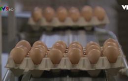 Mỹ: Thu hồi 200 triệu quả trứng vì nguy cơ bùng phát salmonella