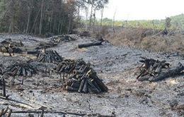 Vụ phá rừng tại xã Quảng Sơn, Đắk Nông: Tạm giữ khẩn cấp phó Trạm Quản lý – Bảo vệ rừng