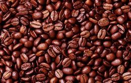 Lào phát triển hợp tác xã sản xuất cà phê sạch