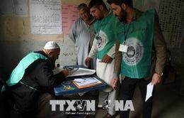 Afghanistan: Các tay súng tấn công, bắt cóc nhân viên bầu cử