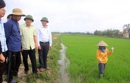 Quảng Trị sản xuất nông nghiệp thân thiện với môi trường
