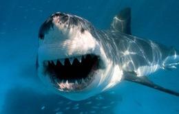 Liên tiếp 2 vụ cá mập tấn công người đi biển ở Australia