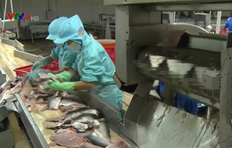 Các doanh nghiệp cá tra phải hướng tới xuất khẩu chính ngạch