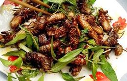 Ve sầu chiên giòn - món khoái khẩu ở Lào